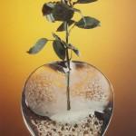 Květinová plastika – Flower sculpture – JR 81